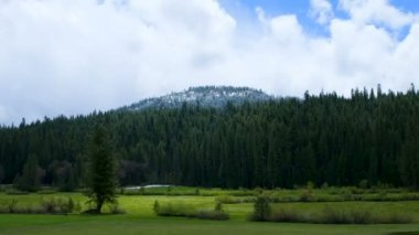 Yosemite Forest — Stock Video