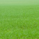 Green grass — Stock Photo #13738940
