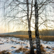 Winter birch-tree — Stock Photo