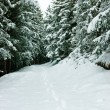 Footprints at winter forest — Stock Photo
