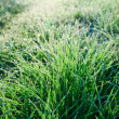 Frozen Grass — Stock Photo