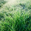 Stock Photo: Frozen Grass