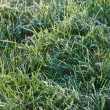 Frozen Grass — Stock Photo #13739463