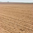 Plowed field — Stock Photo #13739471