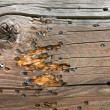 Wood with bullet marks — Stock Photo