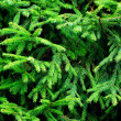 Fir branches — Stock Photo #13739898