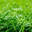 Green grass — Stock Photo #13739913