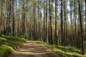 Lesní cesta — Stock fotografie