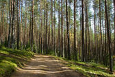 Forest road — Stockfoto