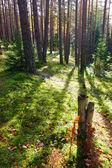 日当たりの良い森 — ストック写真