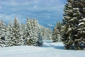 Jedle na zimních horských — Stock fotografie