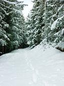 Empreintes à la forêt d'hiver — Photo