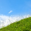 Green grass lawn — Stock Photo #13742344