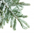 fir branch — Stock Photo #13740162
