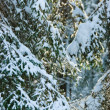 Winter forest — Stock Photo #13740265