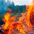 Forest fire — Stock Photo #13740370