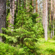 Stock Photo: Summer forest