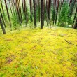 Stock Photo: Mossy meadow