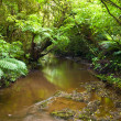 Rainforest - Stockfoto