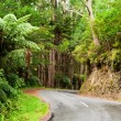 Rainforest road — Stock Photo