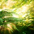 Morning sun in a misty rainforest - Stock Photo
