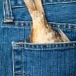 Fishtail in a pocket - Stock Photo