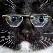 Cat wearing glasses — Stock Photo