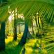 Evening sun in misty rainforest — Stock Photo #13741658