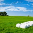 Silage bales on a field - Stock Photo