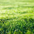 Green grass lawn - Stock Photo