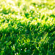 Green grass lawn — Stock Photo