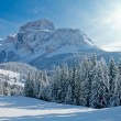 Fir trees on a mountain slope - Stock Photo