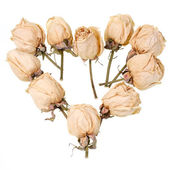 Dried roses — Stockfoto