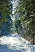 Zimní les — Stock fotografie