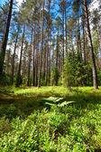 летний лес — Стоковое фото