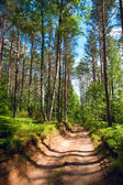 Zomer bos — Stockfoto