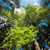 Sommaren skog — Stockfoto
