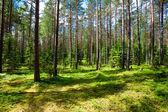 Floresta de verão — Foto Stock