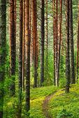 Víla pinewood — Stock fotografie