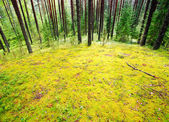 Mossy meadow — Stock Photo
