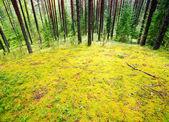 Mossy weide — Stockfoto