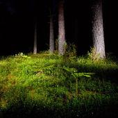 Noční les — Stock fotografie
