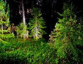 Natt skog — Stockfoto