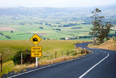 Winding road in New Zealand — Stockfoto