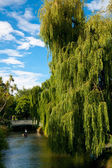 Punting on the Avon River — Stock Photo