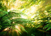 Morning sun in a misty rainforest — Stockfoto