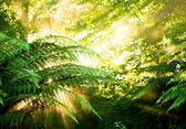 Sole di mattina in una foresta pluviale nebbiosa — Foto Stock