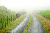 Misty road — Stock Photo