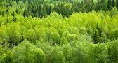 Lesní pozadí — Stock fotografie