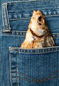 Fiska i en ficka — Stockfoto
